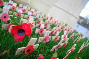 Southampton Cenotaph Poppies
